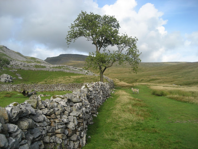 Glacial till smothering the limestone near Crina Bottom, at the southern end of Chapel-le-Dale.  Ingleborough effectively slowed down ice flow causing the material to be plastered over the benches beneath. Stephen Oldfield