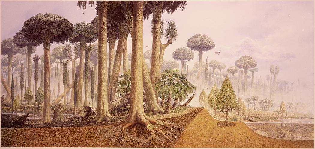 Carboniferous forest. Image by John Sibbick