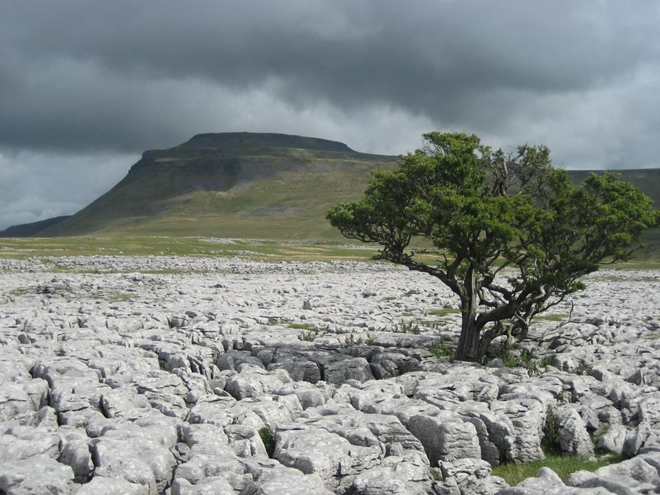 Limestone pavement on White Scars with Ingleborough beyond. Stephen Oldfield