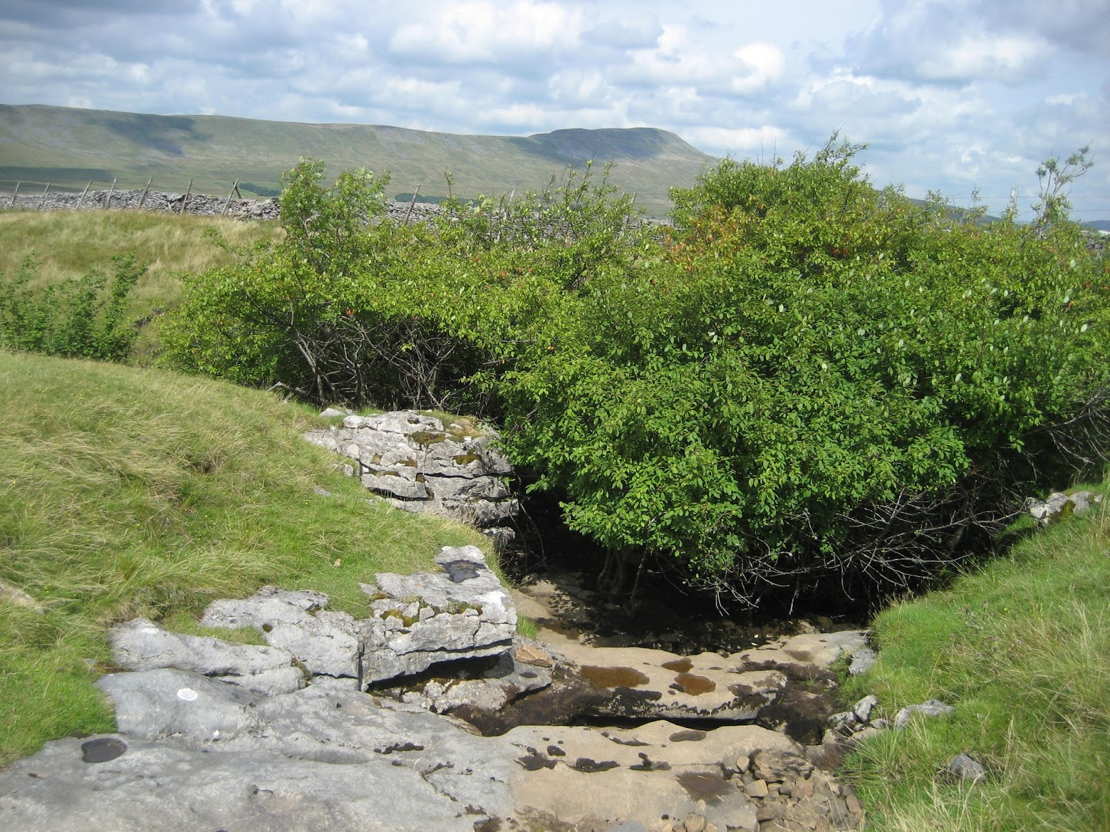 The approach to the south-east corner of Meregill Hole – with the largely unsuspected shaft hidden in trees, and Whernside lying beyond. Stephen Oldfield