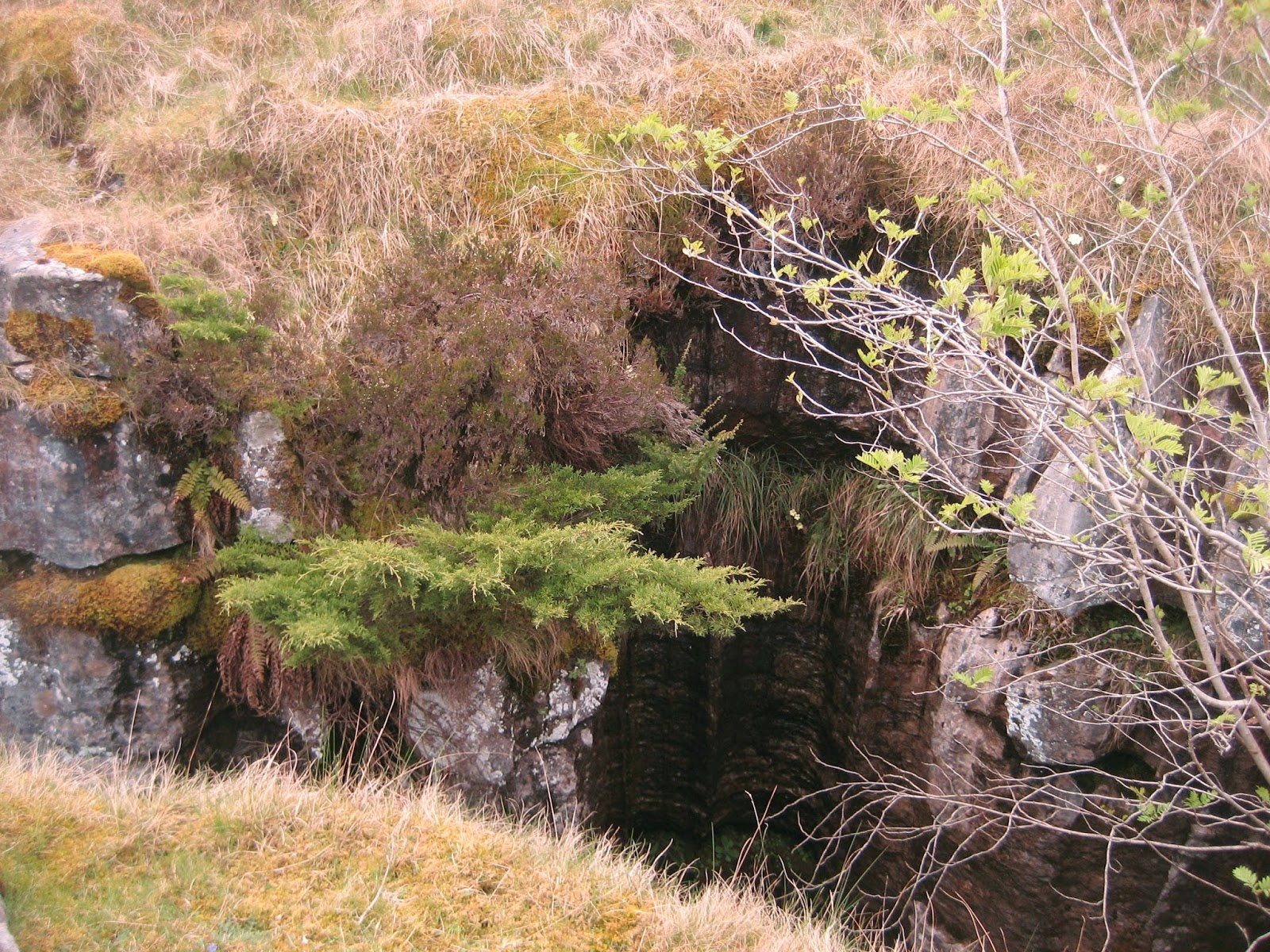 The lone juniper that lends its name this classic pothole. Stephen Oldfield