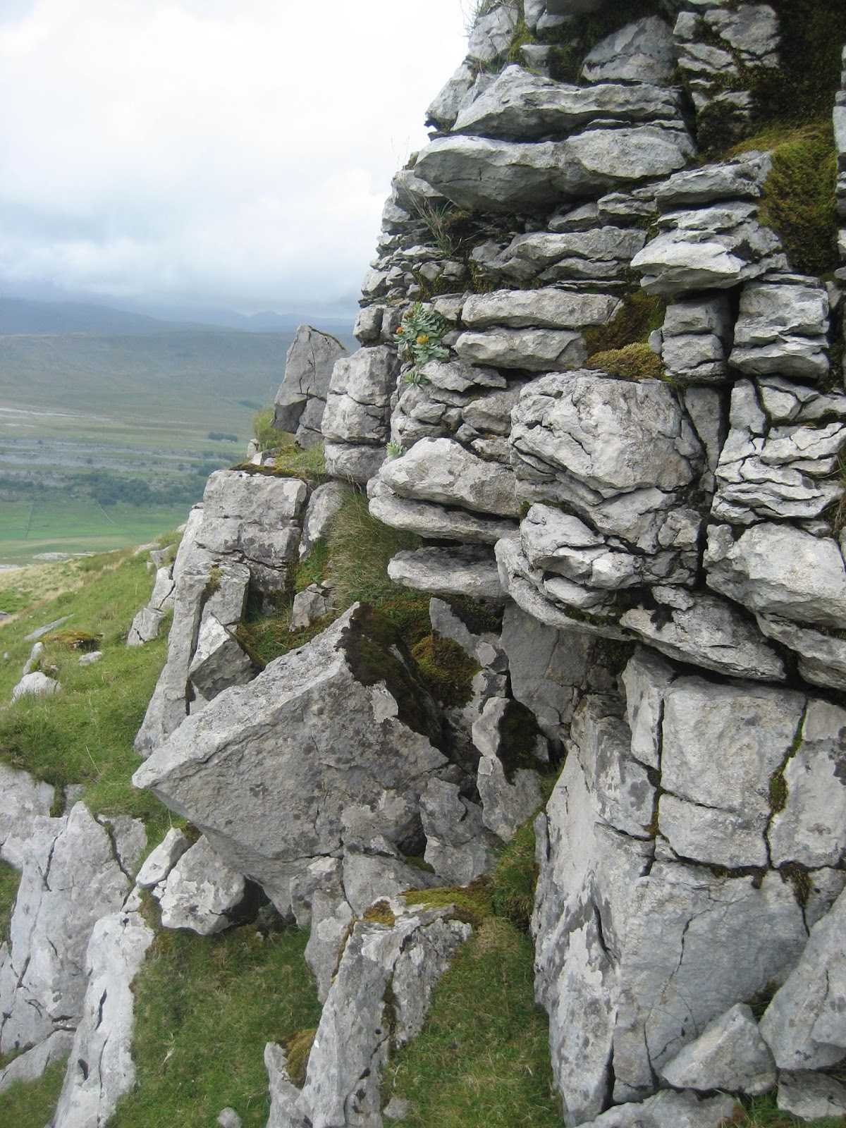 The Main Limestone – the highest band of limestone on Ingleborough, just below the summit. Stephen Oldfield